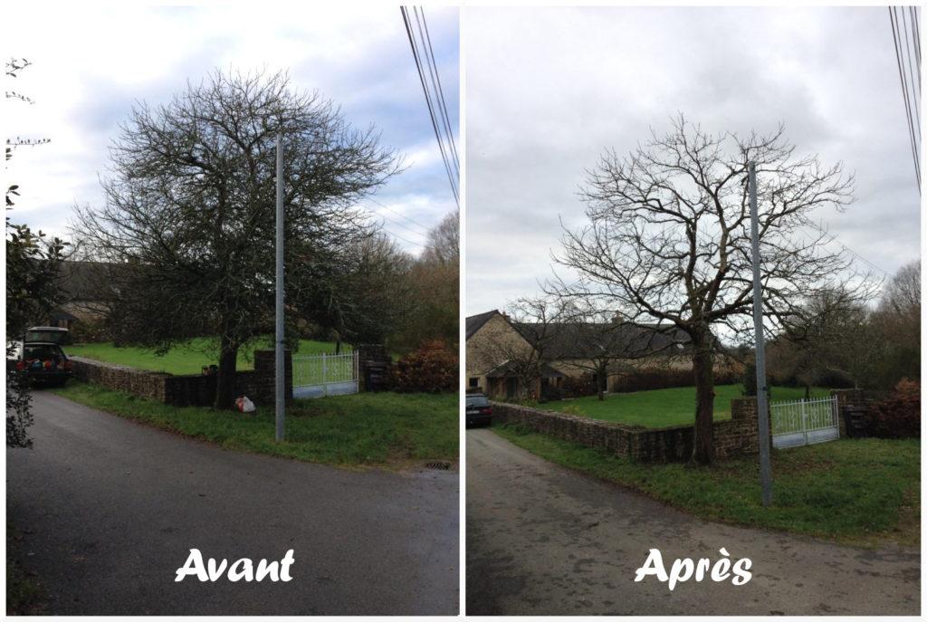 Arbchitecture, Elagueur, Arboriste, Ronan Le Devendec, Auray, Brech, Morbihan, 56