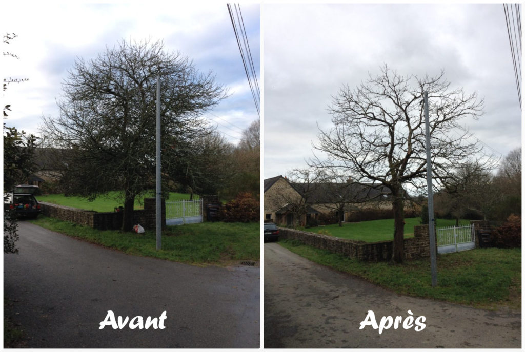 Arbchitecture - Elagueur - Arboriste - Taille eclaircie - Auray- Brech - 56
