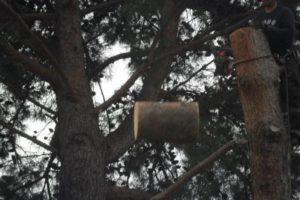 arbchitecture-elagueur-arboriste-abattage-delicat-Auray-Brech-56