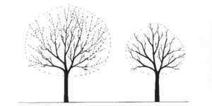 taille-de-reduction - Arbchitecture - Elagueur - Arboriste - Auray -56 - morbihan